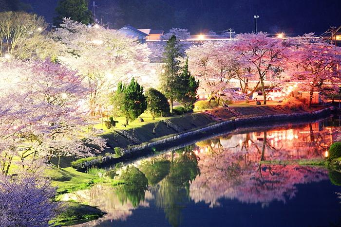 春宵の桜-2