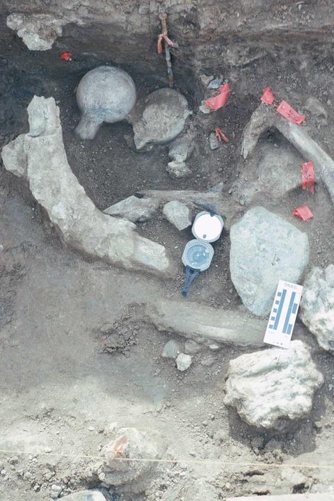 00マストドン化石