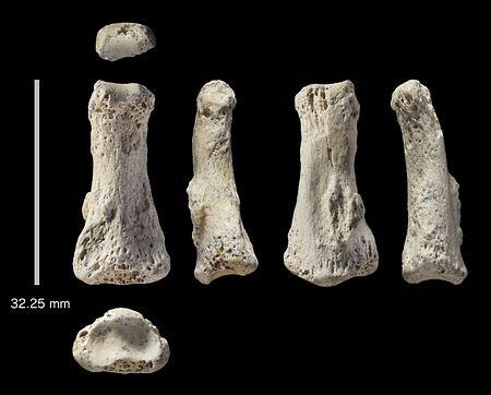09万年前の現生人類の手の指化石