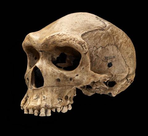 heidelbergensis_Kabweローデシア人