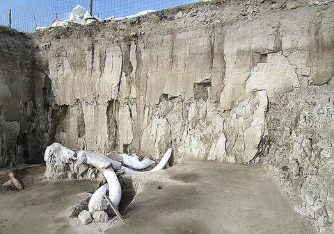 0発掘されたマンモスの骨=メキシコ市北方のトゥルテペック