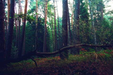 forest-4727094__480
