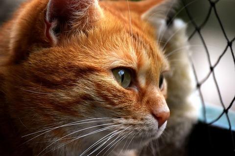 cat-3279064__480