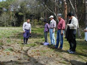 タラの木についての説明