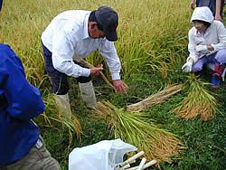稲の束の作り方