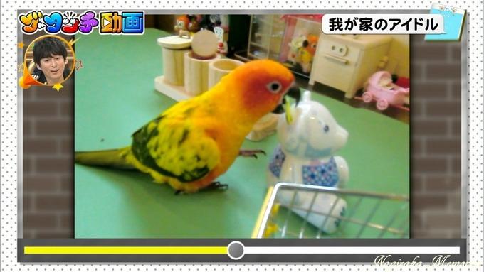 16 ライオンのグータッチ 西野七瀬 (3)