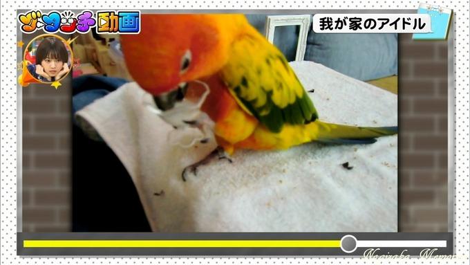 16 ライオンのグータッチ 西野七瀬 (5)