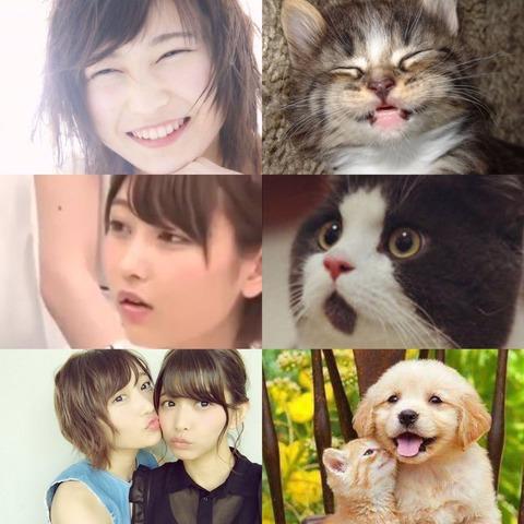 猫 志田2