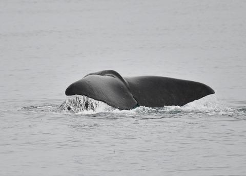 マッコウクジラ0541