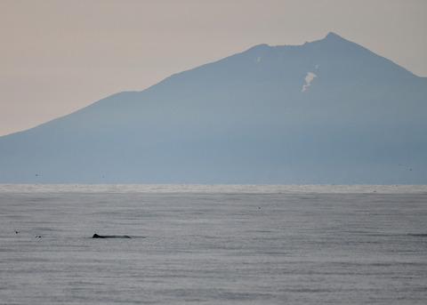 マッコウクジラ0189