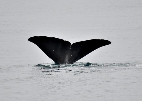 マッコウクジラ0543