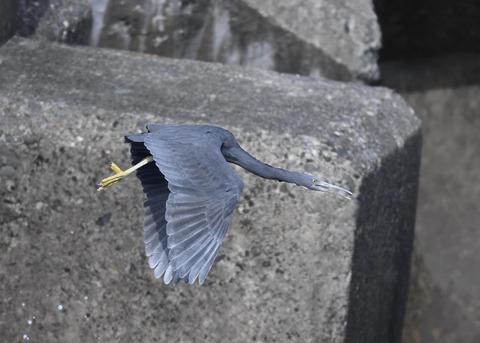 飛ぶ・クロサギ6808