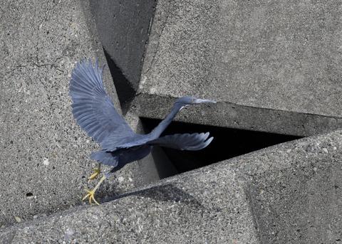 飛ぶ・クロサギ6801