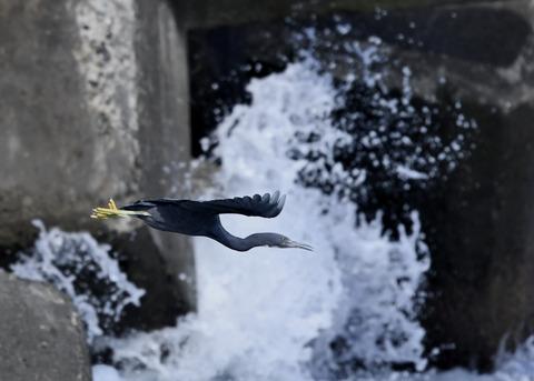 飛ぶ・クロサギ6809