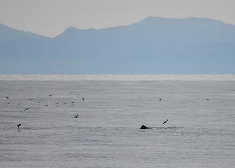 マッコウクジラ0233