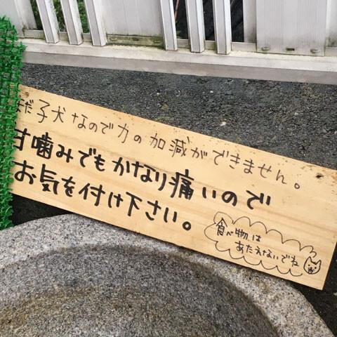 momojirou