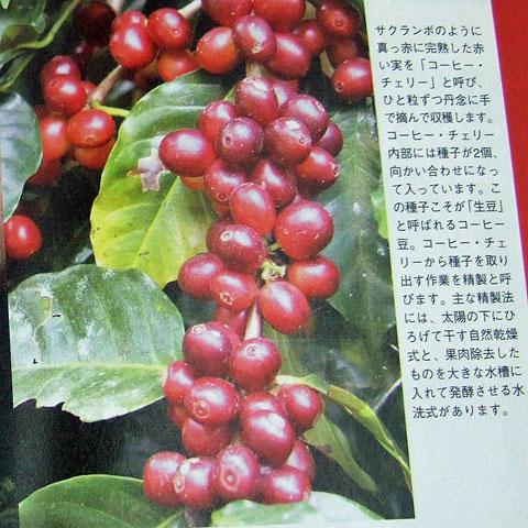 コーヒータイムブック
