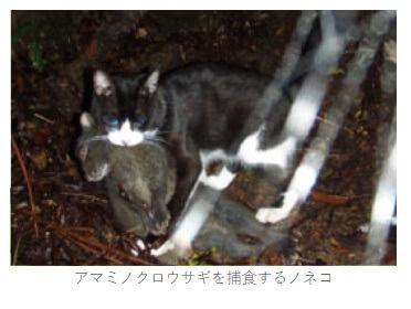 佐上氏「環境省はこの写真を使いすぎている。ノネコが被害を加えていることの証明にならない」(画像は環境省サイトをキャプチャ)