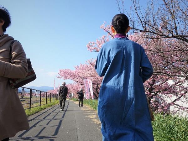 河津桜~山の手桜2020 (12)