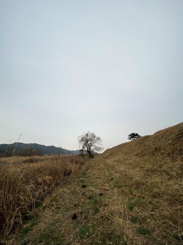 河原の樹2020 (1)