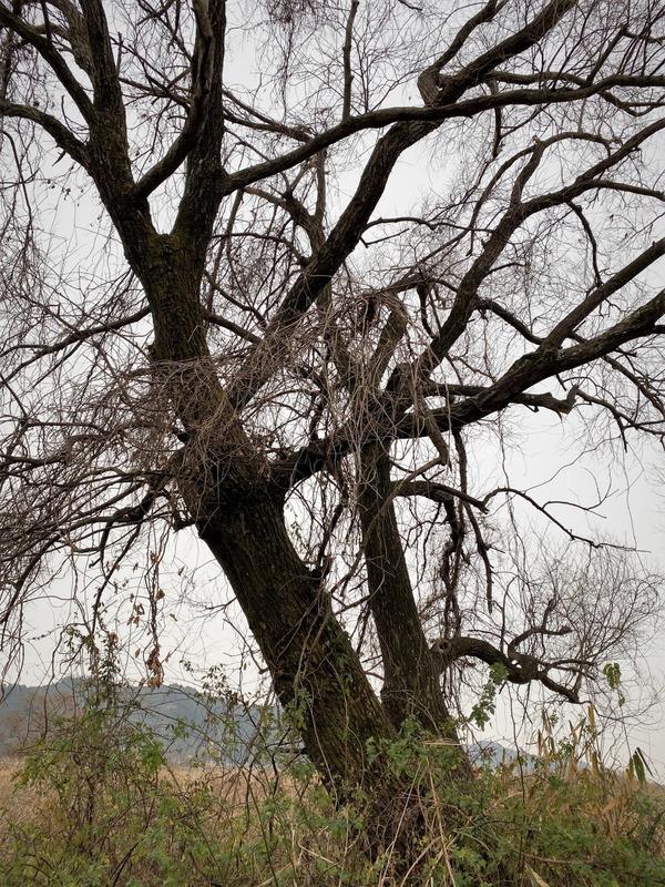 河原の樹2020 (6)