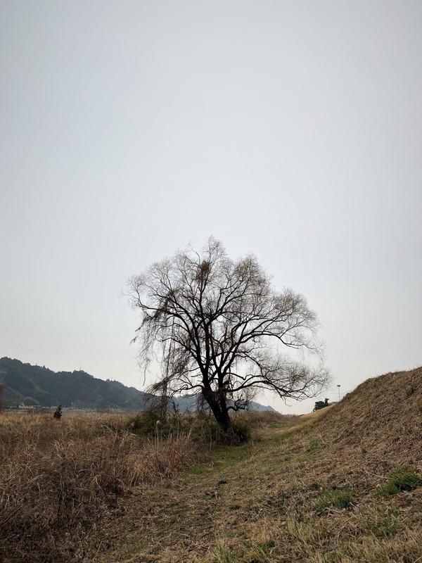 河原の樹2020 (10)