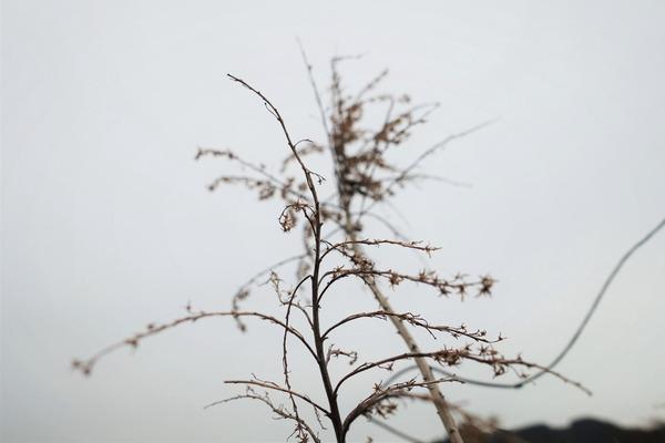 河原の樹2020 (5)
