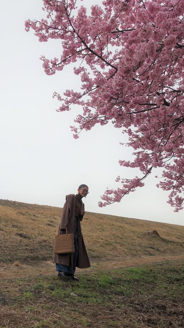 河津桜2020(9)