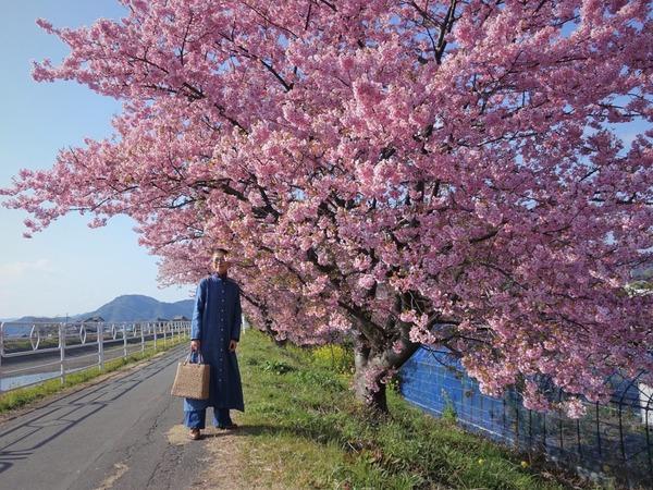 河津桜~山の手桜2020 (16)