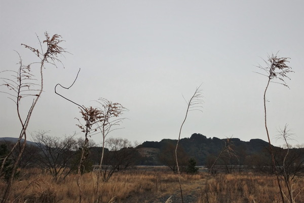 河原の樹2020 (4)