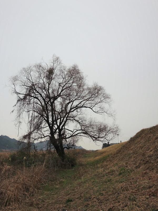 河原の樹2020 (2)