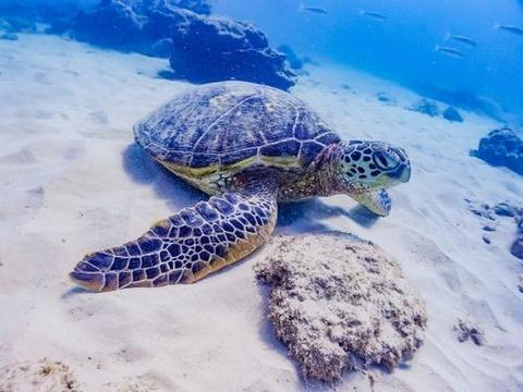 沖縄那覇家族友達同士で貸切できるショップ初めてのダイビング体験にオススメ持ち物ライセンス不要