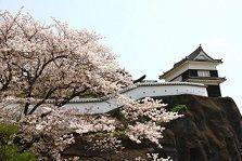 臼杵公園の桜-y5-7