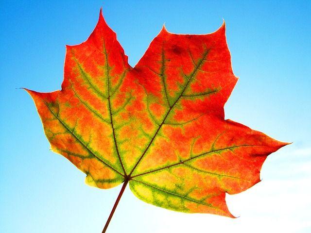 leaf-899069_640