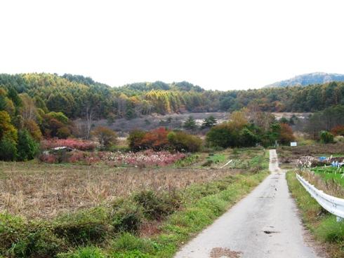 唐花見湿原