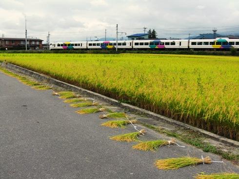 電車と田んぼ
