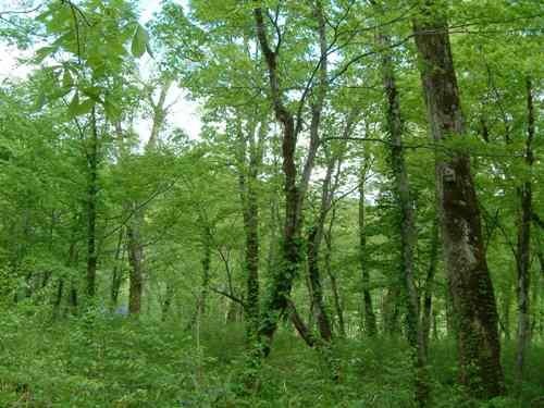 きのこの森