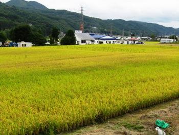 三日町の田んぼ