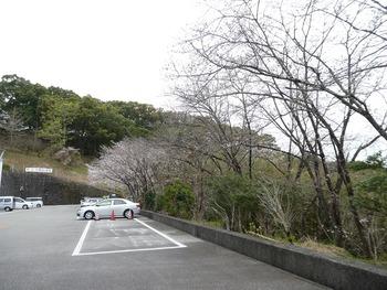 saku11