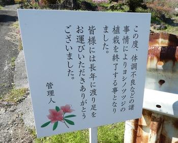 sakurasaku12