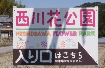 nisigawa13