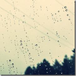 冷たい雨 [写記 vol.578]