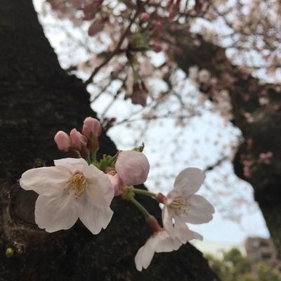 矢場とんが美味しかったり、大道芸が楽しかったりの名古屋 [写記 vol.1062]