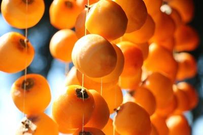 柿が始まる [写記 vol.1636]