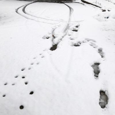 雪 [写記 vol.1720]