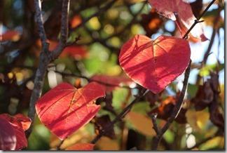 赤い葉っぱ [写記 vol.550]