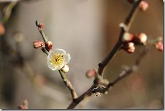 春はすぐそこ [写記 vol.662]