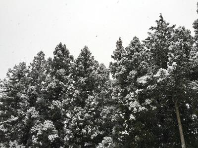 雪が降る [写記 vol.995]