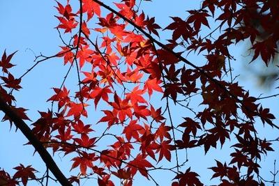 紅葉もそろそろ終わり [写記 vol.1659]