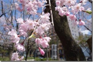 SONY RX100M2で名古屋の桜を撮ってみた
